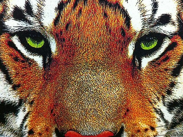 Tiger Print Close Up - Marshall Atkinson
